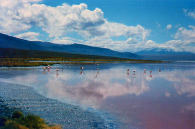 Laguna Colorada James's flamingos